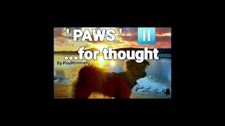 ' PAWs ⏯ ' ....🐕 4 Thought 3 '