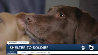 Saving military lives with Shelter to Soldier