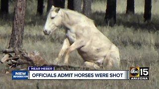 Officials admit wild horses were shot