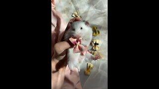cute Hamster living like a prince