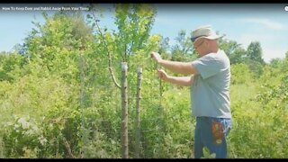 HOW TO KEEP DEER AND RABBIT AWAY FROM YOUR TREES