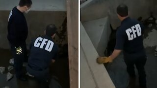 Indiana firefighters rescue beaver from drain