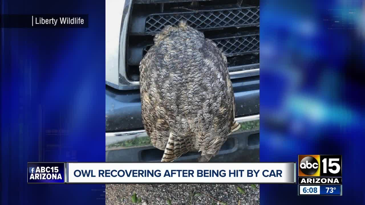 Owl recovering after being hit by car in Phoenix