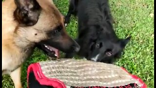 Dog spotting ~ Brotherhood is ... being crazy together! 🤣🤣🤣