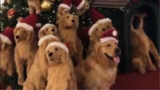 Dog Christmas tree hides a secret