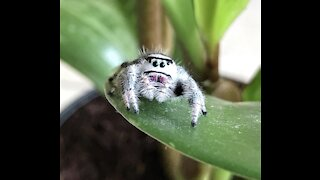 THE CUTEST SPIDERS ON EARTH
