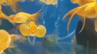 These cheeky fish are so very cute