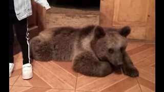 Family looks after orphaned bear