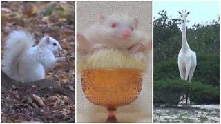Animaux albinos: une beauté rare et exotique