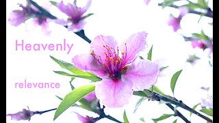Heavenly Relevance Series Intro