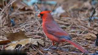 So Beautiful Small Birds 2
