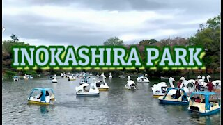 INOKASHIRA PARK I TOKYO I JAPAN