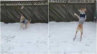 Denne hunden vil ikke være inne så lenge det snør!