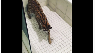 Unique kitty loves playing in the shower