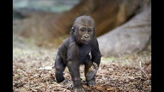 Omaha's Henry Doorly Zoo & Aquarium Shares Re-Opening Plans