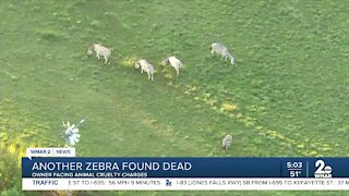 Zebra farm owner charged with animal cruelty, another zebra found dead
