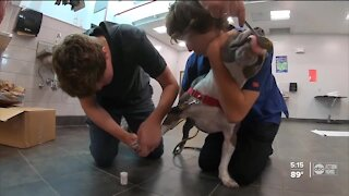 Pinellas high school students helping prepare pets for adoption