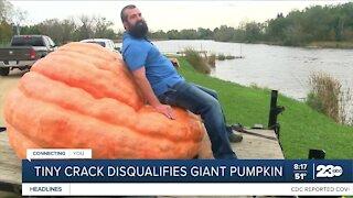 Tiny crack disqualifies giant pumpkin
