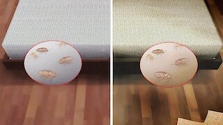 How to quickly get rid of bed bugs