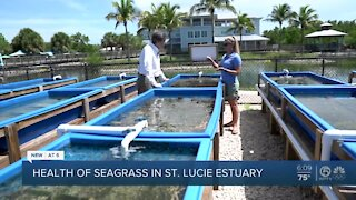 Health of seagrass in St. Lucie Estuary, Indian River Lagoon tied to discharges