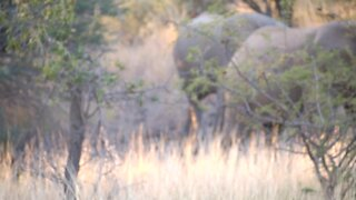 SOUTH AFRICA - Elephants in South Africa (VIDEO) (CDG)