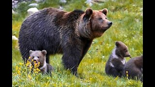 Family Care Animal Nature Wildlife