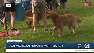 Michigan Humane Mutt March