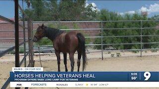 Horse based therapy program for veterans