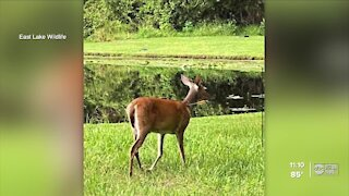 Neighbors find two deer hit by an arrow