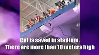 Cat is saved in stadium. There are more than 10 meters high.