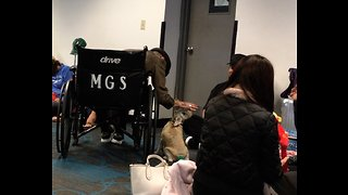 Puppy knows how to gather a crowd at the airport