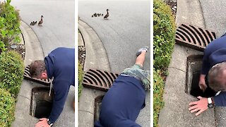 Retired RCMP officer lifts sewer cover and saves baby ducklings