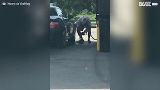 Senhor limpa o carro com gasolina!