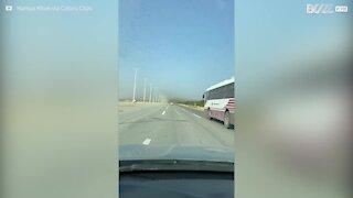 Un nuage de sauterelles envahit une autoroute saoudienne