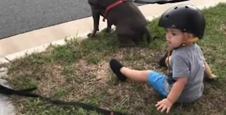 """Tot joins his dogs when he hears """"sit"""""""