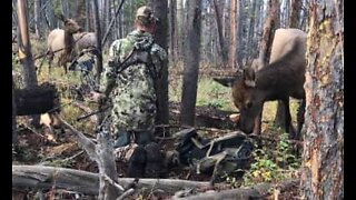 Camouflaged hunter gets up close and personal with elk