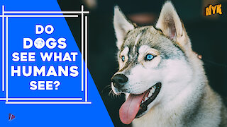 Do dogs see what humans see?