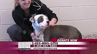 Michigan Humane Society Telethon – Meet Petey