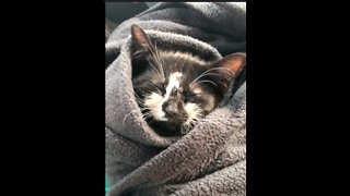 Defying All Odds, Kitten Slowly Recovers From Head Trauma