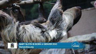 Denver Zoo- Baby Sloth Recap