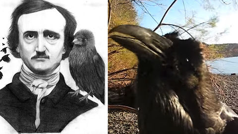Watch This Talking Raven Put On A Creepy Show