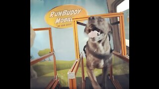 Man Shows Off His Incredible Mobile Running Dog Business!