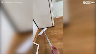 Un rat contre-attaque depuis le dessous du frigo