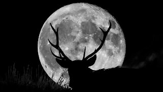7--23-21 Buck Moon 2:00 AM Moonlight Manifestation Window Invitation - I Have The Link Here Now!!
