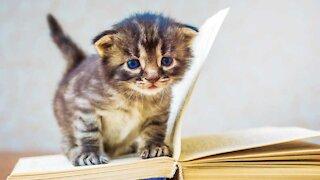 Beautiful Adorable Cute Little Kitten