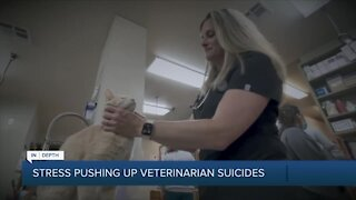 Stress pushing up veterinarian suicides