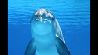 The magnificent world of dolphins