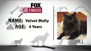 FOX Finders Pet Finder - Velvet Molly