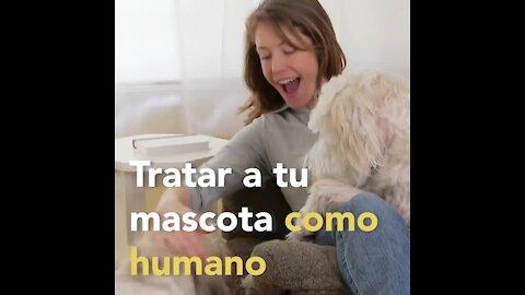 Por que no debes tratar a tu mascota como humano   Sabías que...