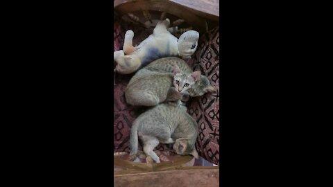 Cute Cats Slerping